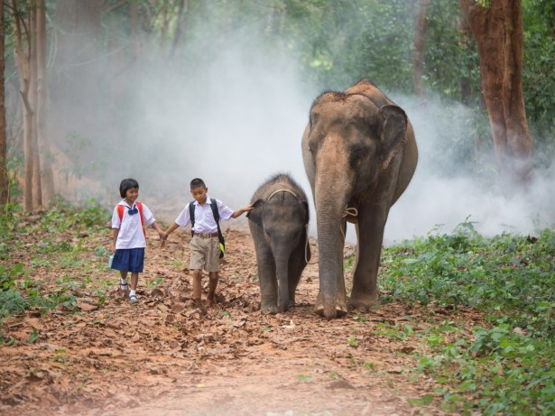 Beautiful! : Two kids make the morning walk to school with their pet ELEPHANTS