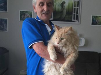 One Of Britain's Biggest Pet Cats On The Loose After Breaking Out Of Garden 'Fortress'