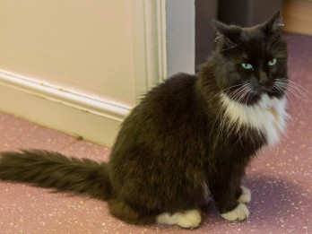 Train Station's Resident Cat Is Real-Life Fat Controller After Being Warned Off Treats