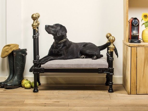 New range of posh four poster beds costing £1,500 launched for dogs!