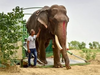 WATCH - Awesome Video Of 70-Year-Old Elephant Taking First Ever Steps Without Chains After Being Rescued