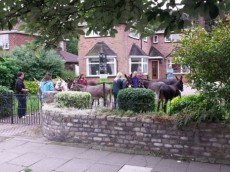 Resident stunned to find 13 donkeys in front garden