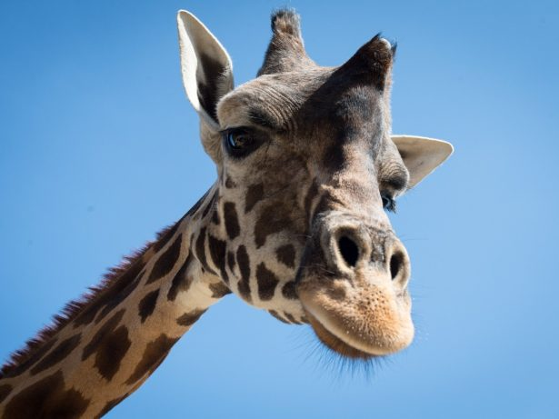 Zookeeper Creates 20ft Selfie Stick To Help Visitors Take Pictures With Giraffes