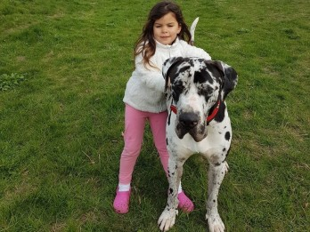 Great Dane Rescued After Living In A Van For 23 Hours A Day For Two Months