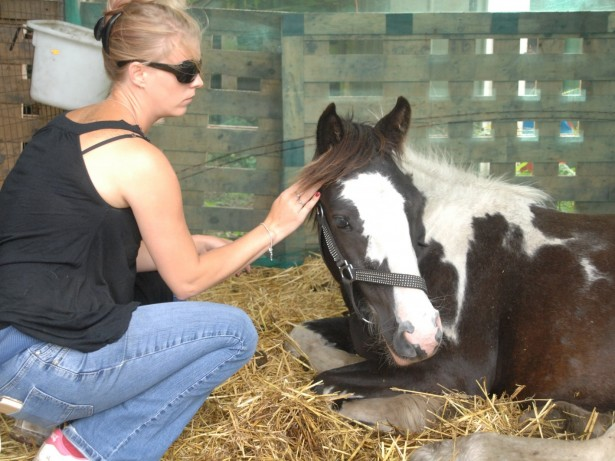 Two young horses slashed in a cruel knife attack
