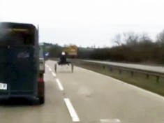 WATCH : Shocking Dashcam Footage Captures Yobs Racing Horses And Carts On Busy Dual Carriageway
