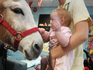 Donkey pays visit to sick hospice patients