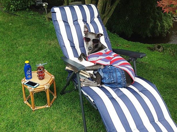 Meet the dog who thinks he's a human and is enjoying the hot British summer