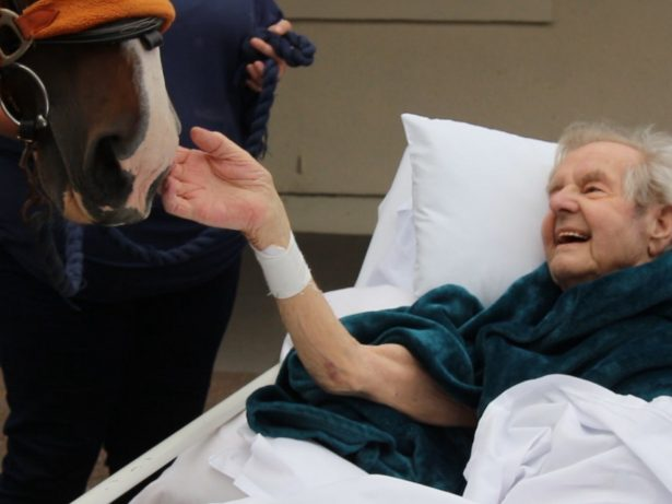 Elderly Man Granted Dying Wish - To Feed A HORSE One Last Time Just Days Before He Passed Away