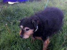"""""""Callous Old Man"""" Dumped Terrier At Car Boot Because He """"Didn't Need A Dog"""""""