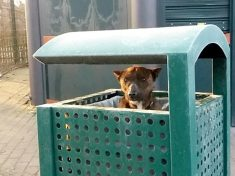 Dog Rescued After Being Found Inside Litter Bin At Park In Freezing Conditions