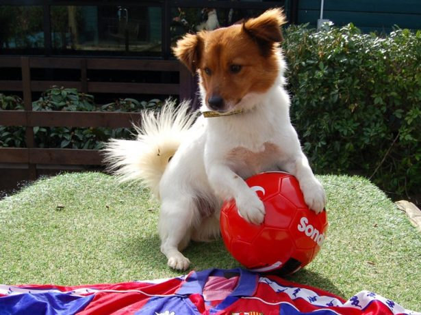 Footie Mad Pooch Named After Messi Seeks New ''Club''