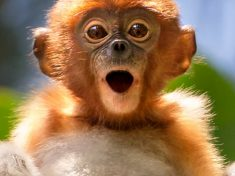 Adorable Baby Monkey Pulls A Face For The Camera In Posey Primate Pictures