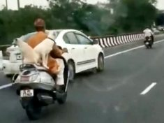 WATCH : Motorcyclist Rides On Busy Road – With Three Dogs Happily Sat Beside Him