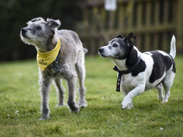 One Of Britain's Oldest Rescue Dogs To have Happy Retirement After Being Rehomed With Another 17-Year-Old Dog