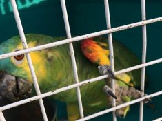 Missing Parrot Was Found Eating A Biscuit In Tesco
