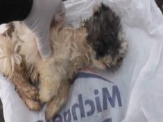 Evil Puppy Farmer Who Kept Dying Dogs In Squalid Conditions Spared Jail