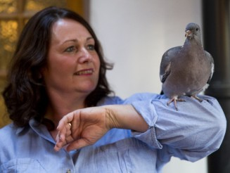 Injured pigeon nursed back to health by kind family now believes he's one of their pets
