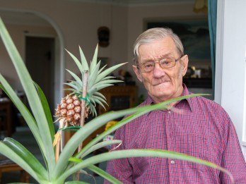 Gardener stunned when pineapple grows from fruit he bought eight years ago!