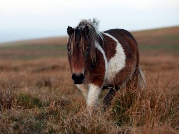 Farmers' Market Stall Sells Dartmoor Ponies As Sausages And Burgers