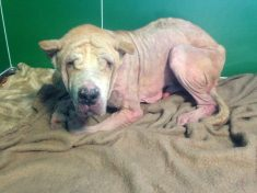 Dog Was So Badly Neglected Vets Couldn't Tell What Breed It Was