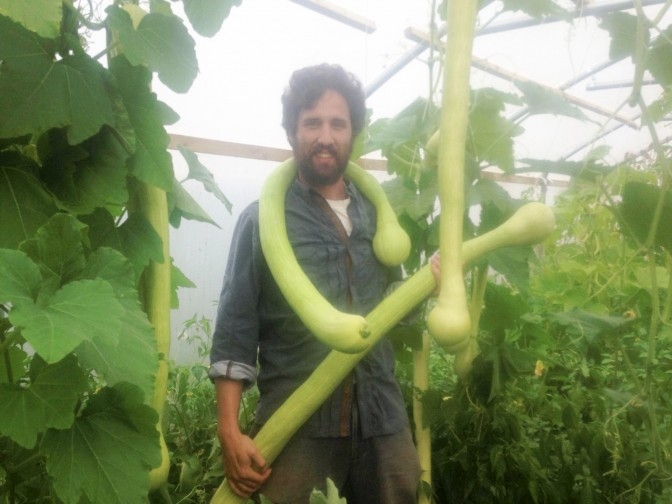 Community farm in stitches after growing penis veg