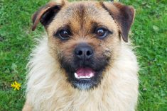 Lets Find Rocco A Home! – Rescue Dog With Shaggy Ruff Bears Uncanny Resemblance To William Shakespeare