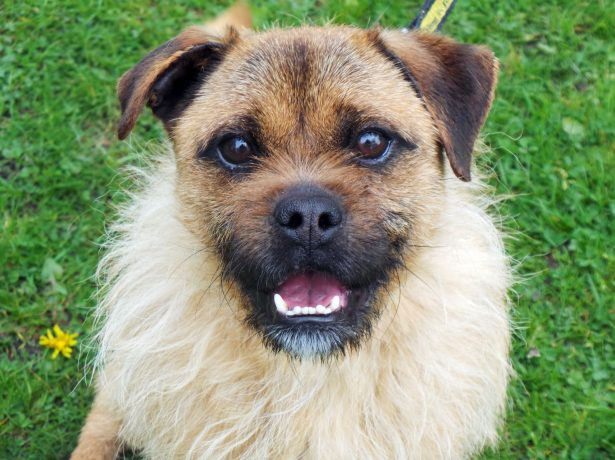 Lets Find Rocco A Home! - Rescue Dog With Shaggy Ruff Bears Uncanny Resemblance To William Shakespeare