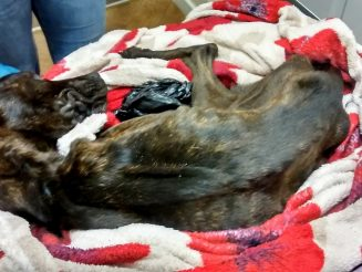Sickening! - Lesbian Couple Banned From Keeping Pets For Life After Starving Dog To Death