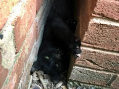 RSPCA Smother Cat With Washing Up Liquid To Free It From Wall