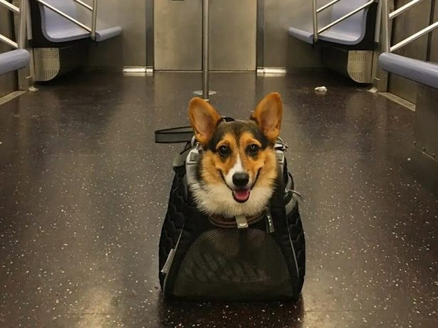 These New Yorkers Have The Best Response To The Subway Dog Ban!
