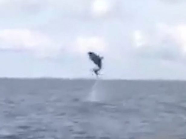 WATCH Incredible Video Showing Dolphins Jumping For Joy Off Jersey