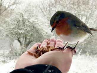 Mum Strikes Up Festive Friendship With Cheeky Robin