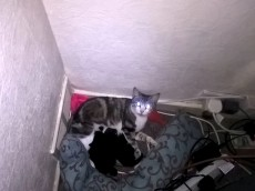 Woman found family of cats living behind her TV