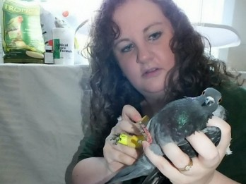 Bird-loving woman hit with littering fine for feeding pigeons