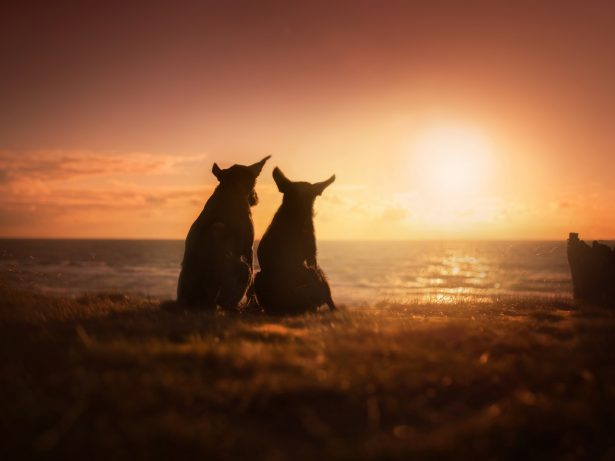 Photographer Captures Her Dogs In World's Most Beautiful Natural Settings