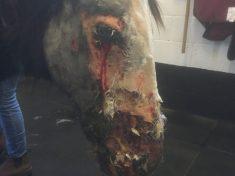 Foal Abandoned After Suspected Chemical Attack