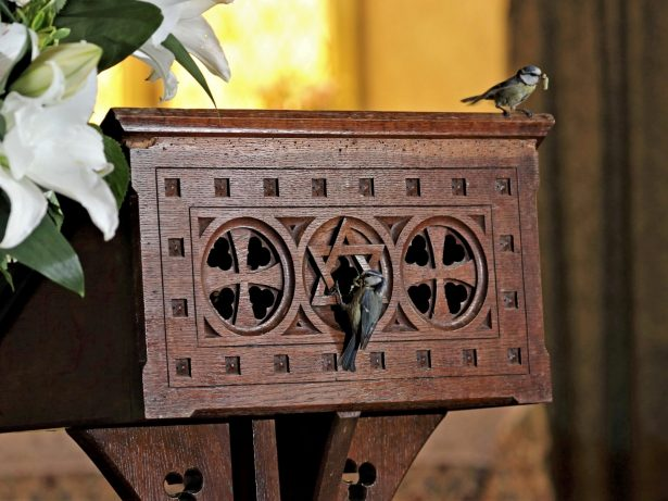 Church Shut For Two Weeks After Pair Of Blue Tits Found Nesting In Lectern