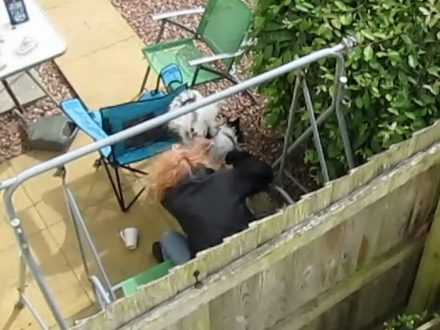 Woman Who Slammed Dog On The Floor In Fit Of Rage Is Jailed
