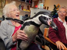 Residents At Care Home Get Perked Up With A Visit From A Pair Of Penguins!
