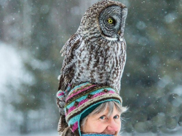 Incredible Image Shows Enormous Owl Sitting On Woman's Head After Swooping Down To Look For Food