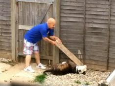 Cruel Skinhead Banned From Keeping Dogs For Life After Beating Friend's Bulldog With A Plank