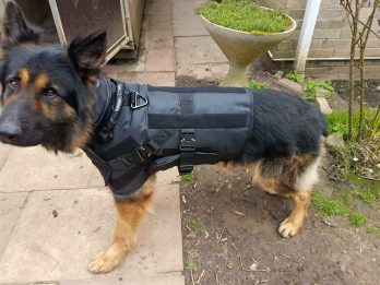 Police Force To Trial Protective Vests - For Its Dogs