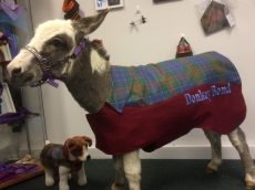 Baby Donkey Who Thinks He's A Human Celebrated His First Birthday – With A Handmade Coat And Carrot Cake