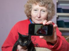 Are Black Cats Discriminated Against Because They Don't Show Up Well In Selfies?