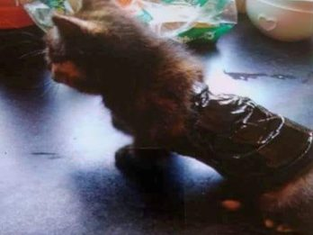 Police Chasing Cruel Thugs Who Wrapped Pp Kitten In TAPE - And Bound Its Legs With Cable Ties