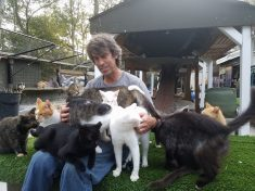 Man Transforms His Home Into Sanctuary For 300 Abandoned Cats
