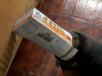 WATCH: Hilarious Moment Guilty Dog Gets Caught With His Head Stuck In Cheesburger Box