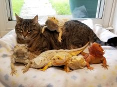 World's Most Mellow Cat Spends Her Days Chilling Out With A Dozen Reptiles – 12 Lizards And Four Tortoises