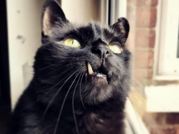 Help Us Find A Home - RSCPA Desperately Trying To Rehome Cat That Looks Like Vampire Bat